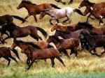 libertad (caballos salvajes)