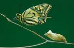 de gusanos a mariposa