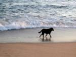 perro orilla